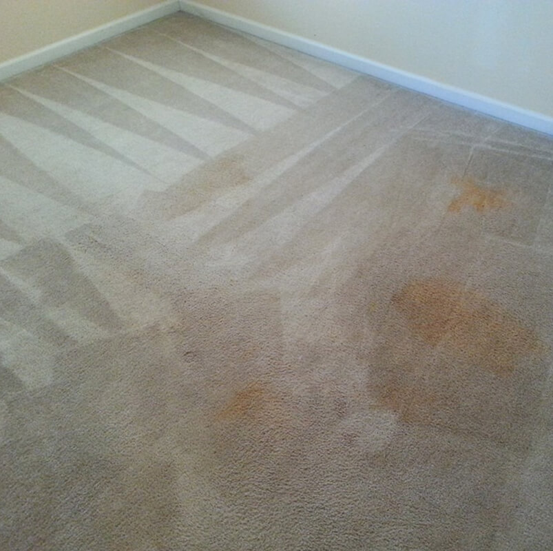 pet stain & odor removal pascagoula